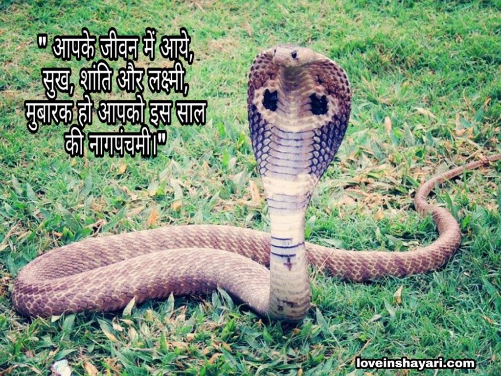 Nag Panchami images